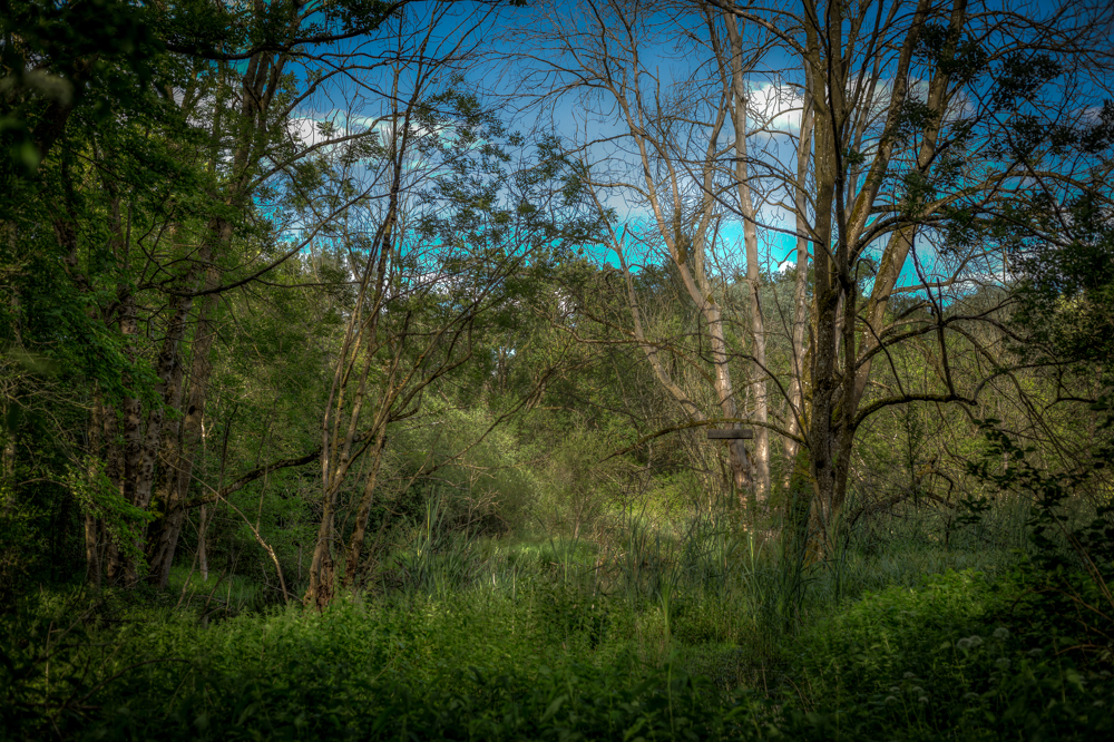 1G0A0722_3_4-HDR